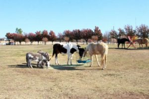 Rob's Ranch Purcell Oklahoma